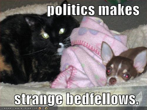 Starnge-Bedfellows